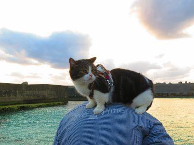 Dive Time CAT