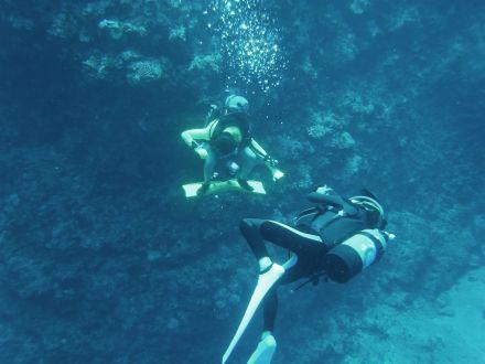 メモリアルダイビングサーフィン