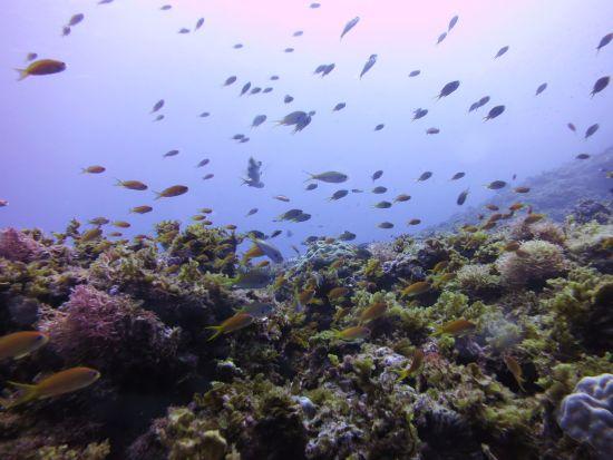 幼魚いっぱい