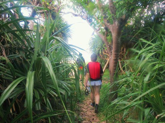 ビーチまでのジャングル
