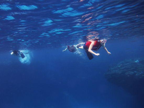 珊瑚の棚上魚群