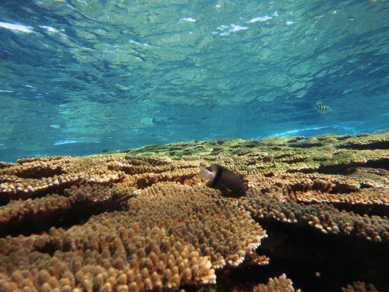 沖永良部珊瑚棚